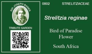 Image of plant label